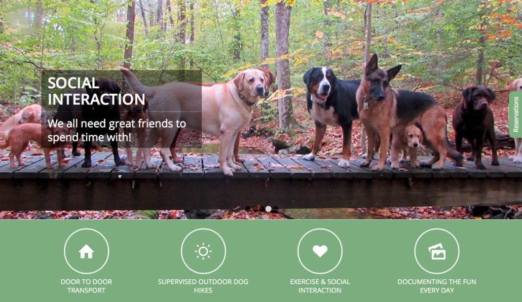 active-dog-social-interaction